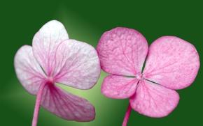Picture green, pink, Petals