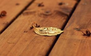 Wallpaper sheet, autumn, drop