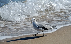 Picture sea, bird, wave