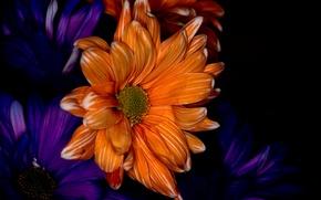 Picture macro, paint, petals, twilight