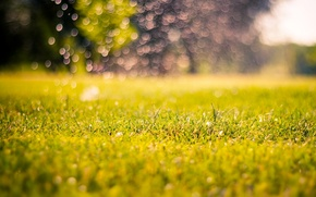 Picture greens, grass, nature, background, blur, morning, meadow, day, nature, macro, bokeh