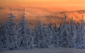 Picture snow, tree, winter, fog, ate, twilight, forest, sunset