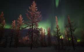 Picture the sky, stars, trees, Northern lights, Night