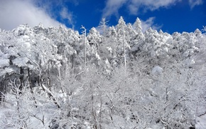 Picture winter, forest, the sky, clouds, snow, trees, slope