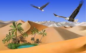Picture sand, lake, palm trees, Desert, oasis, flight, eagles