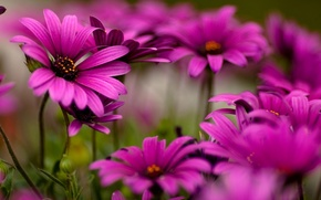 Wallpaper flowers, mood, beautiful