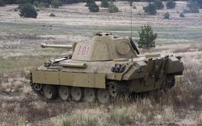 Picture german, Panther, tank, sahara2014