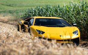 Picture Lamborghini, Aventador, Superveloce, LP-750