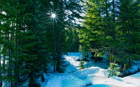Wallpaper winter, forest, rays, nature