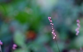 Picture flowers, macro, blur, pink, Sprig, buds