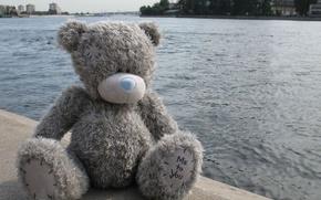 Wallpaper Teddy, sitting, bear