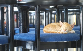 Picture cat, red, chair, sleeping