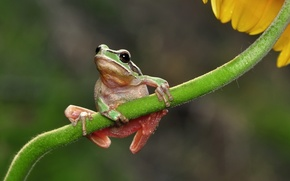 Picture flower, macro, frog, stem