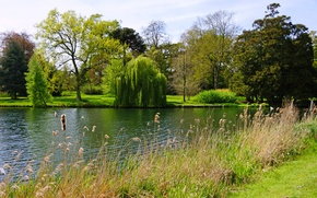 Picture summer, grass, trees, lake, Park, England, the bushes, Peterboro