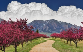 Picture road, the sky, clouds, trees, mountains, flowering