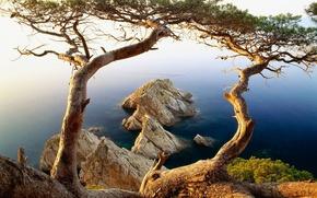Wallpaper Trees, Rocks, Water