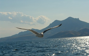 Picture sea, mountains, Seagull