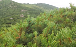 Picture greens, nature, peak, garbage, Chekhov