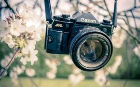 Picture spring, camera, garden, Canon