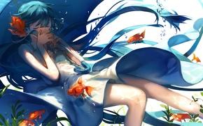 Picture water, fish, algae, bubbles, umbrella, Hatsune Miku, Vocaloid, long hair, gold, closed eyes