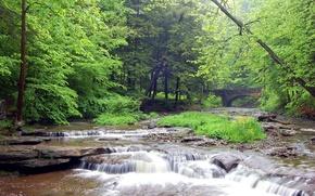 Wallpaper Forest, River, Bridge