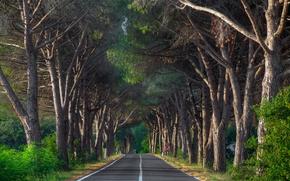 Picture road, trees, landscape
