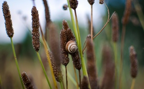 Picture shell, snail, stalks