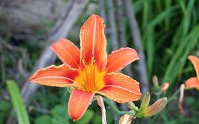 Picture flowers, macro, closeup