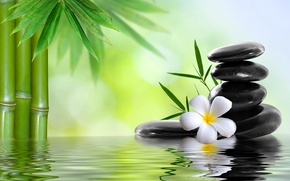 Picture stones, water, spa, bamboo, Spa, flower