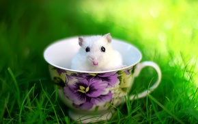 Picture summer, grass, glade, mouse, Cup