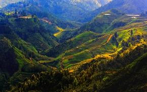 Picture mountains, field, Vietnam, forest, plantation, Sapa