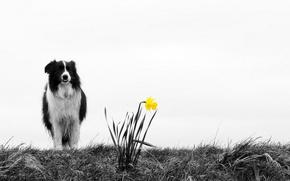Picture flower, nature, dog