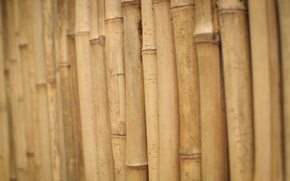 Picture stems, bamboo, wood