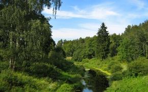 Picture the sky, stream, Greens, birch