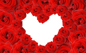 Picture flowers, heart, roses, rose, heart, valentine's day