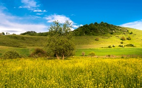 Picture field, summer, grass, flowers, hills, yellow, meadow, the bushes
