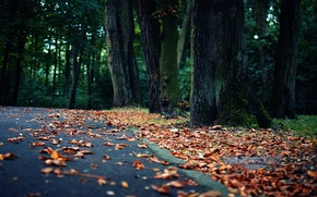 Picture road, forest, leaves, landscape, nature