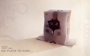 Picture kitty, box, figure, hole, hiding, apofiss, agent night owl