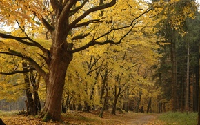 Wallpaper forest, leaves, trees, Autumn, yellow, forest Park