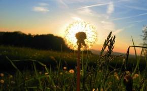 Wallpaper the sun, grass, Dandelion