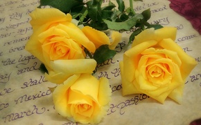 Picture letter, roses, yellow, yellow roses