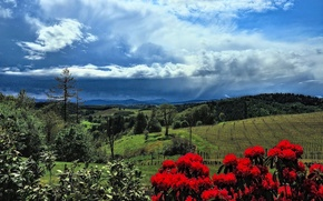 Picture the sky, trees, flowers, mountains, hills