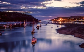 Picture the sky, trees, night, lights, Bay, yachts, boats, tide, Bay