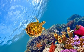 Picture fish, the ocean, turtle, corals, starfish, under water