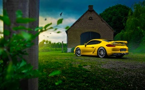 Picture Porsche, Cayman, Car, Nature, Color, Yellow, Summer, GT4, Rear