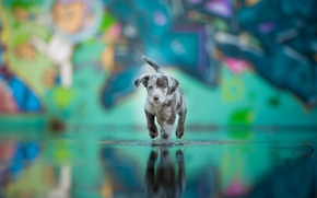 Picture water, each, dog, puppy, color