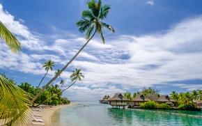 Picture sea, beach, tropics, palm trees, houses, summer, sunshine, beach, sea, ocean, paradise, vacation, palms, tropical, ...