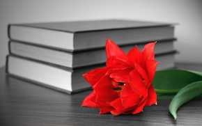 Picture flower, red, table, books