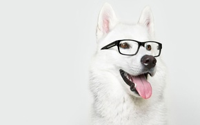 Wallpaper dog, glasses, Laika