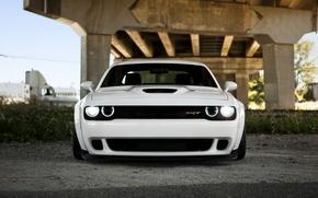 Picture Dodge, Challenger, Dodge, Hellcat, Challenger, SRT, 2014